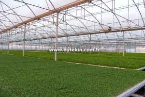 seedling greenhouse setup costs