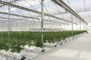 Soilless Agricultural Greenhouse