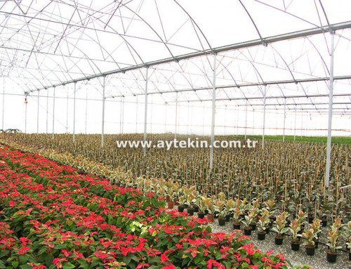 Flower Greenhouse Adana