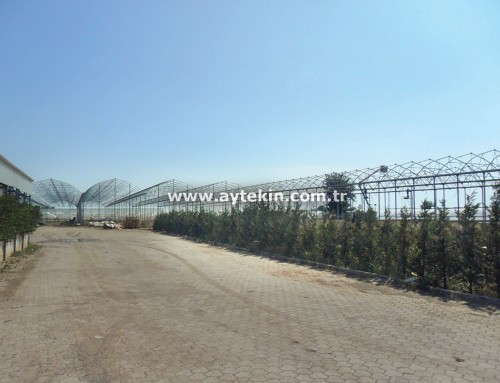 Soil Based Greenhouse Antalya