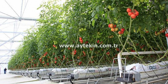 Greenhouse companies in Antalya