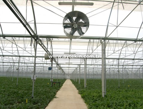 Seedling Greenhouse Antalya