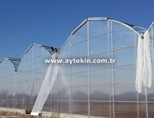 Flower Greenhouse Iraq