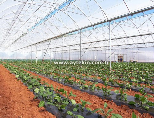 Soil Based Greenhouse Mardin
